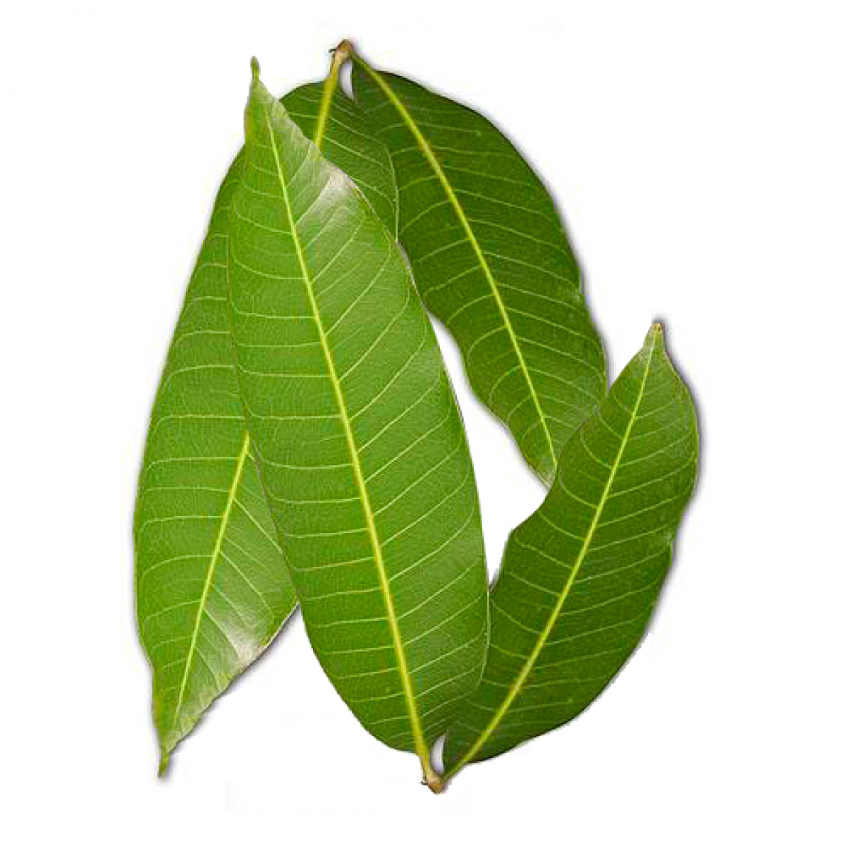 Mango Leaves Navaratri Special